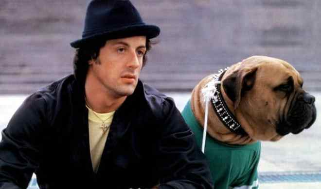 Sylvester Stallone dog tribute