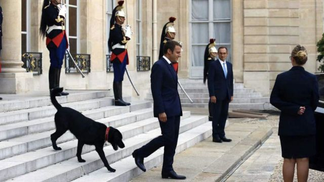 French President dog