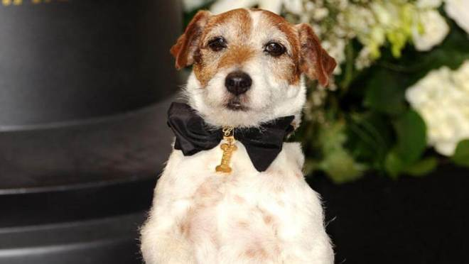 cannes dog award uggie