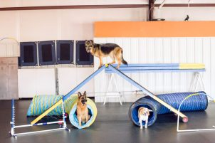 D.O.G. Obedience Group - Agility Training