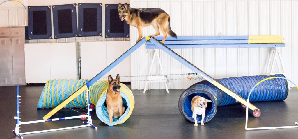 D.O.G. Obedience Group - Agility Practice