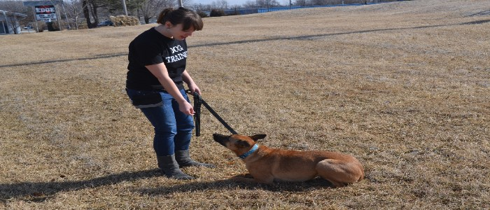 Shawna - D.O.G. Obedience Group - Trainer 2