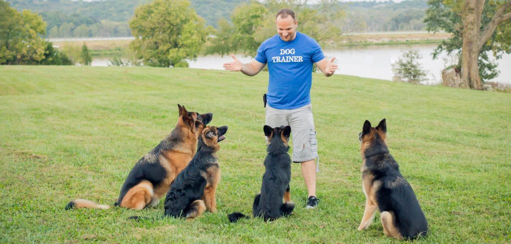 Chris White - D.O.G. Obedience Group Owner and Trainer image 4
