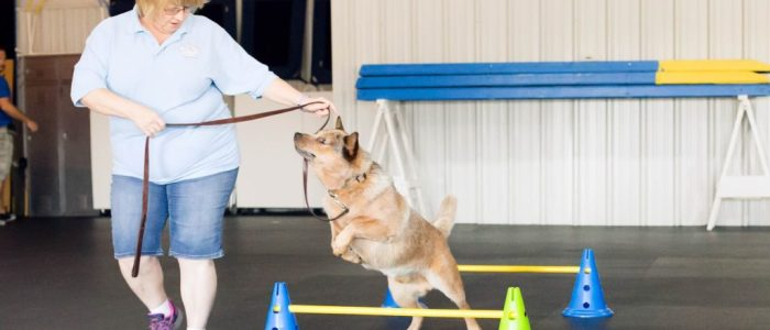 Loretta - D.O.G. Obedience Group - Agility Trainer