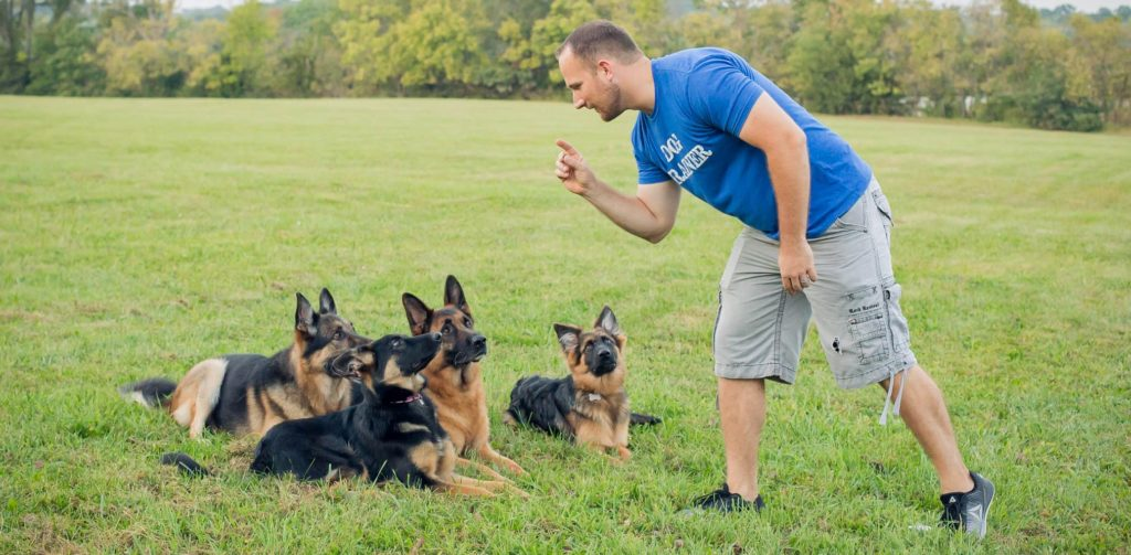 0f4ce8a6c33f5 Obedience Training – D.O.G. Obedience Group