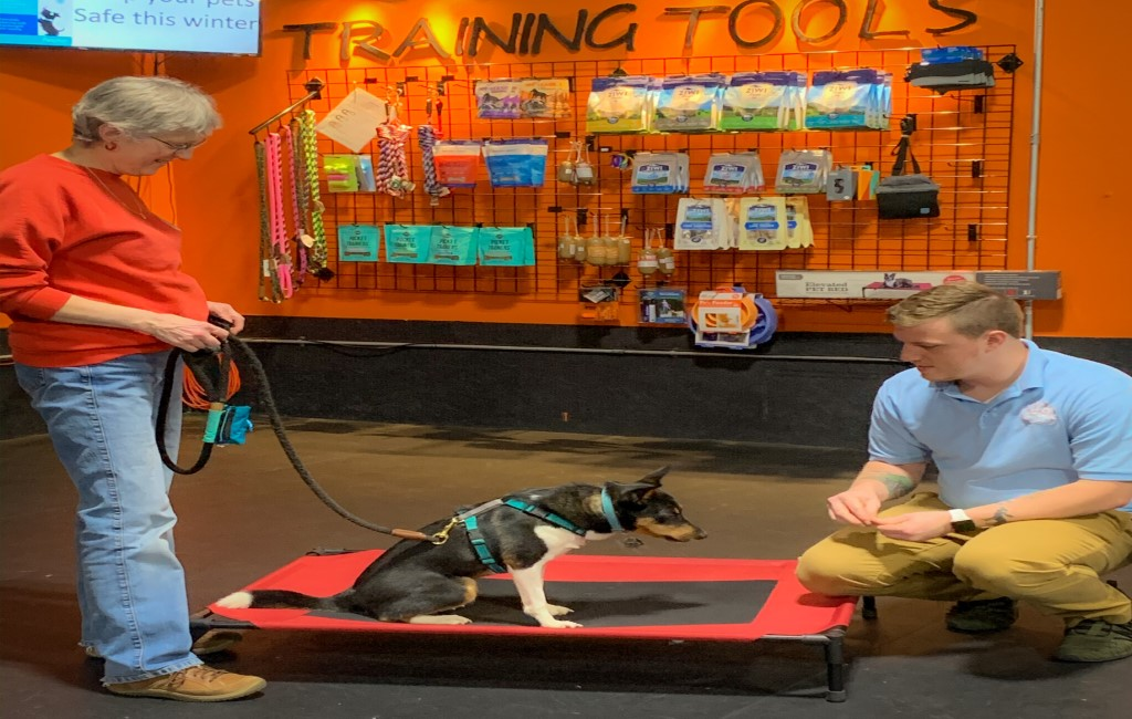 Trainer and Owner 1 on 1 dog training