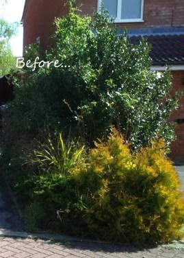side garden before4