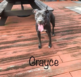 Grayce