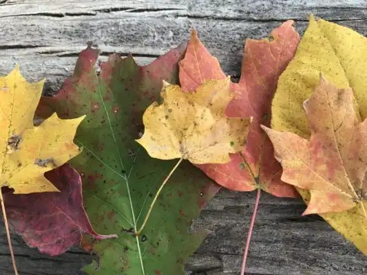 Fall Changes