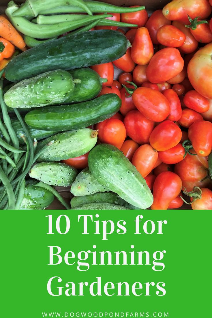 tips for beginning gardeners
