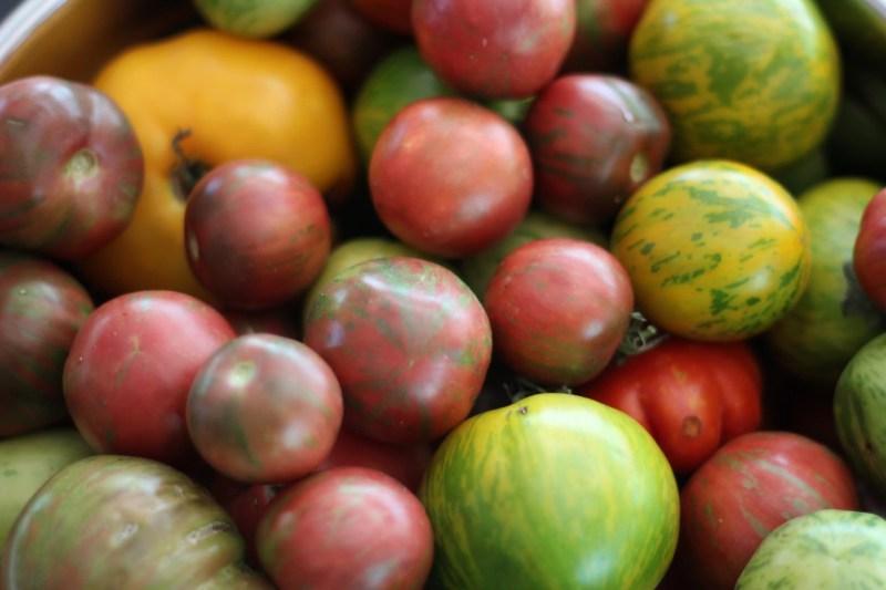 Should you start seeds indoors?