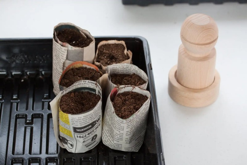 Newspaper pots are easy to make