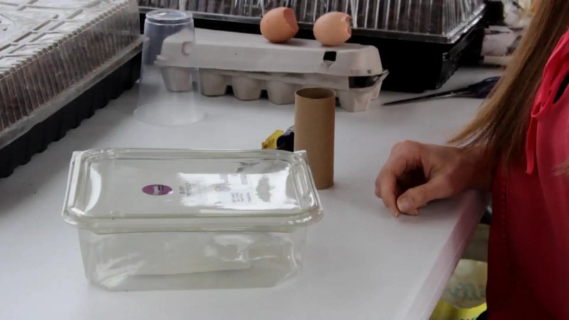 Plastic salad containers work well for seed starting
