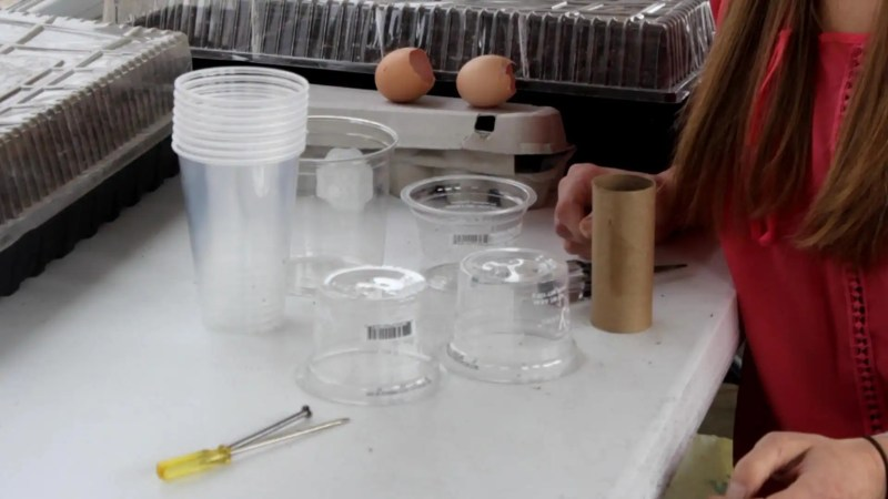 Plastic cups and containers are good for seed starting