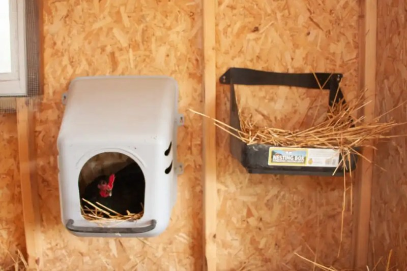 Nesting boxes are important for your backyard chicken coop