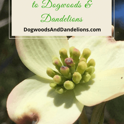 Welcome to Dogwoods and Dandelions!