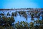 Purple Island/mangroves in Al Khor