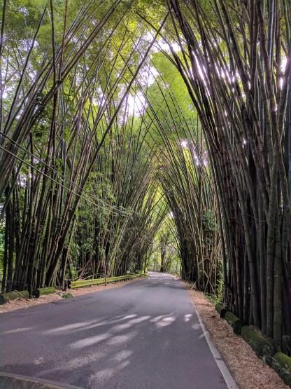 Bamboo Roadway 2