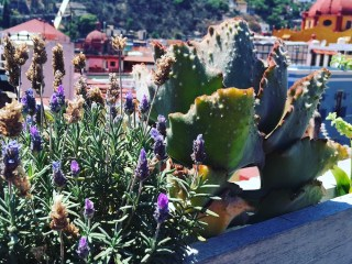 Roof top view of Guanajuato with flowers