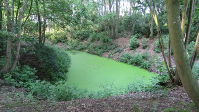 Water-filled crater in Railway Wood