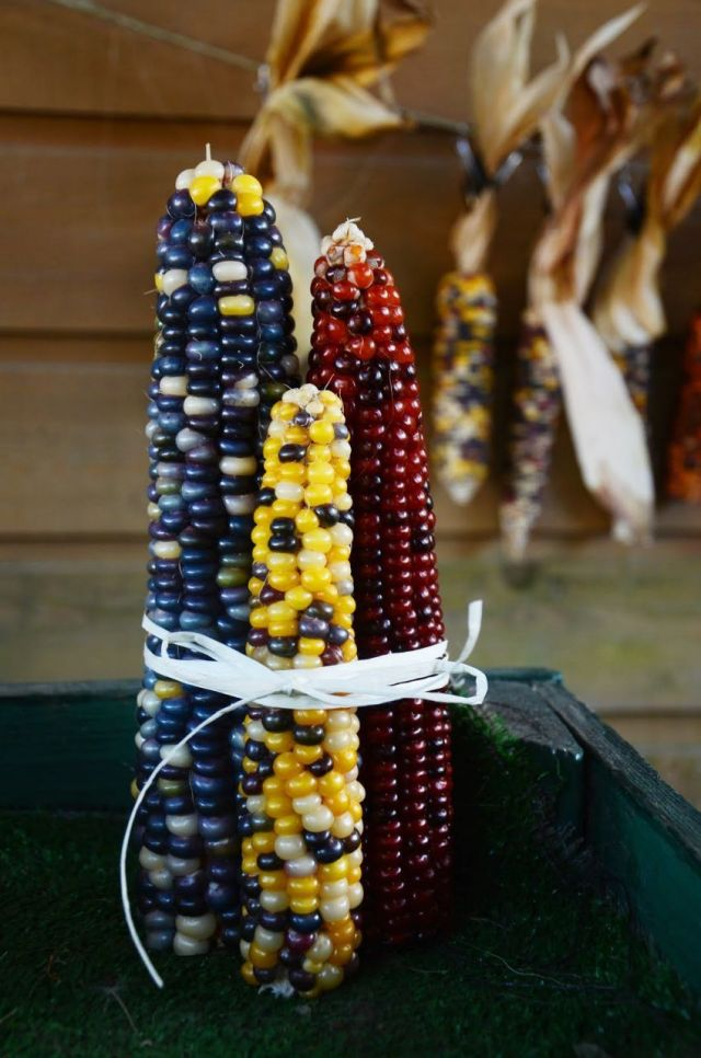 Beautiful diy indian corn decorations