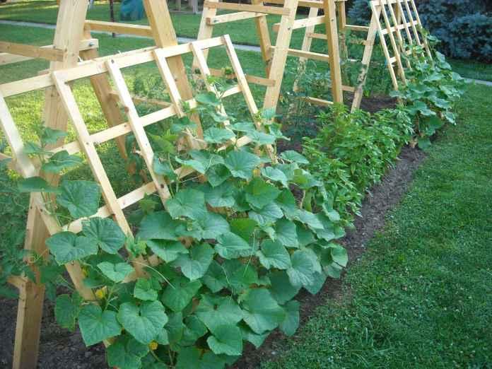 5abbb6687d59c9cc7619d9b1e8ea2c89 | Как правильно выращивать огурцы