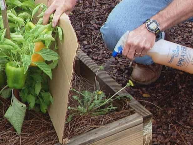 image1-63 | Как победить сорняки без использования химии