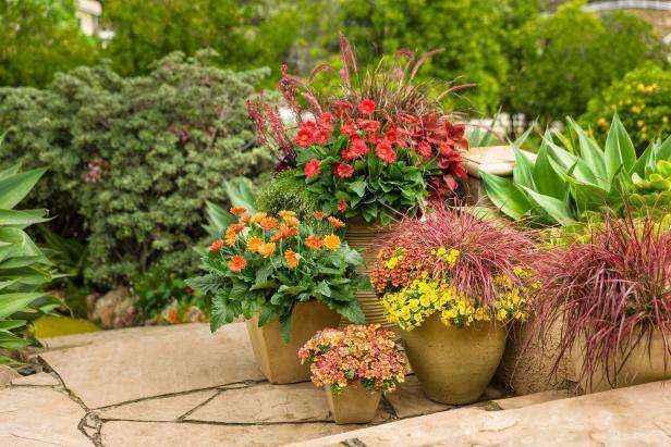 image2-52 | 6 советов начинающим садоводам