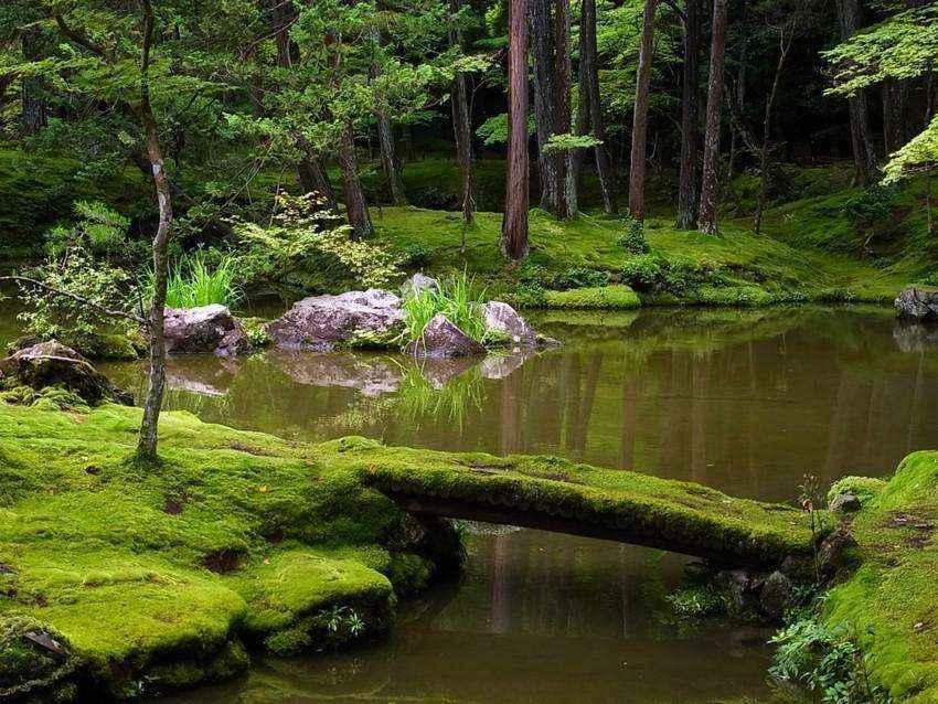 image7-21 | Золотые правила организации японского сада