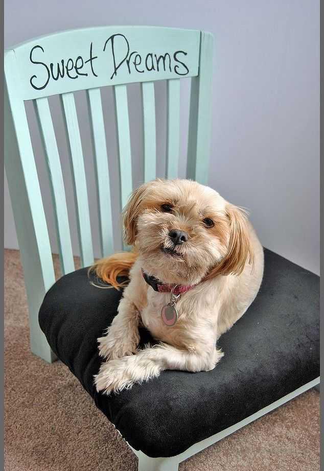 image20-1   Кровати для домашних животных из подручных материалов