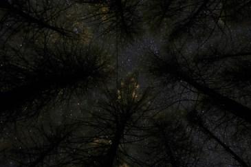 Sleeping in the woods. Stargazing - timetraveling. Top secret location