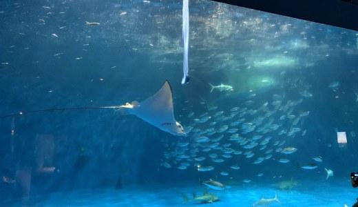 いおワールドかごしま水族館で海のいきもの達に学び、癒される!