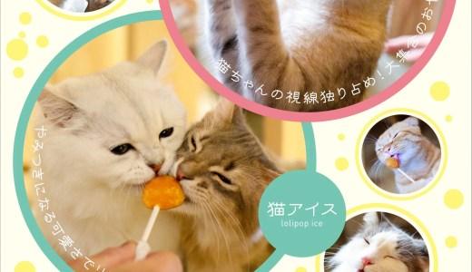【福岡初!】「猫カフェMOCHA」がイオン筑紫野店にオープン!
