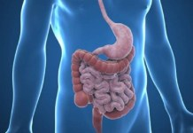 gastroenteroloji neye bakar