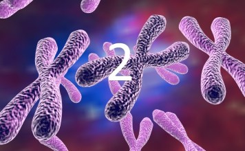 kromozom 2 nedir