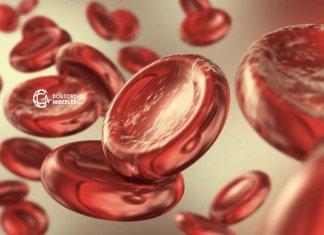 hemoglobin elektroforezi ne demek
