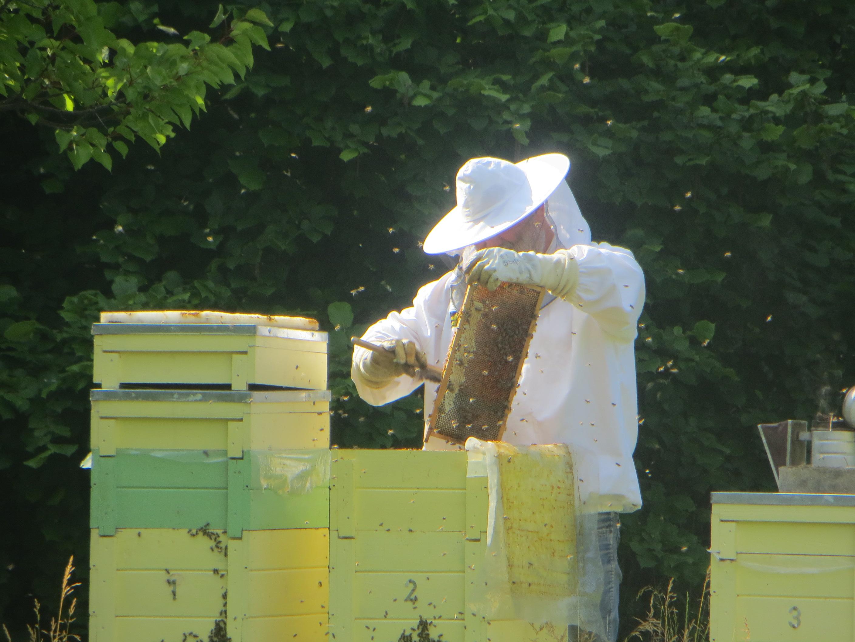 Lopják a mézet!
