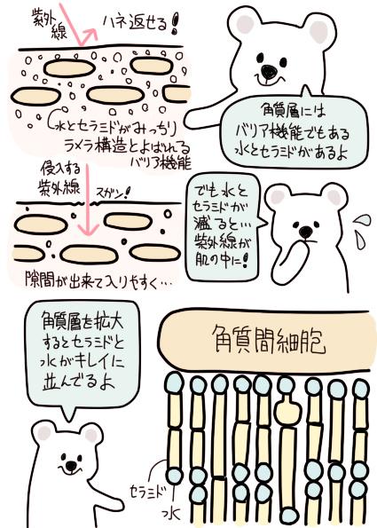 角質層のバリア機能について.jpg