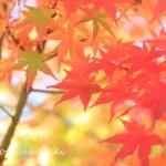 紅葉・・自由なイメージで撮ってみたい!