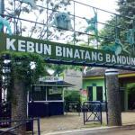Kebun Binatang Bandung Kebun Binatang Bandung Cover - Dolan Dolen