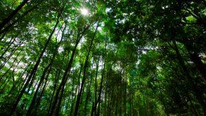 Taman Hutan Raya Ir. H Djuanda