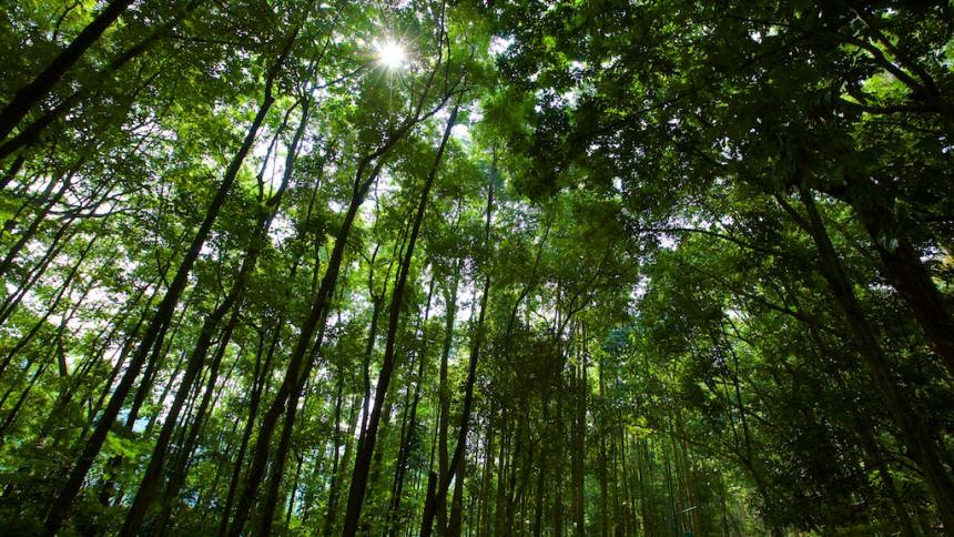 Taman Hutan Raya Ir. H Djuanda Taman Hutan Raya Ir - Dolan Dolen