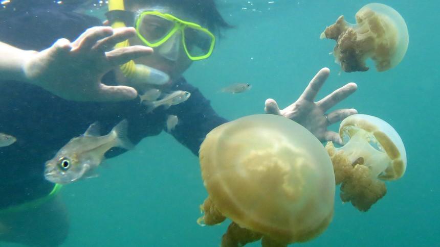 Ubur-Ubur Pulau Kakaban Derawan Ubur Ubur Pulau Kakaban Derawan - Dolan Dolen