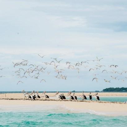 Pantai Ngurtafur 6 Pantai Ngurtafur by dantoadityo - Dolan Dolen