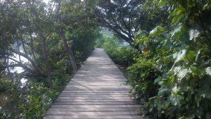 wonorejo mangrove ecotourism, hutan bakau, butan mangrove, surabaya, dolan dolen, dolaners