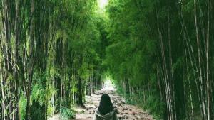 Taman Sakura Keputih Surabaya, Taman Sakura Surabaya, Taman Sakura Keputih, Taman Harmoni, Surabaya, Dolan Dolen, Dolaners