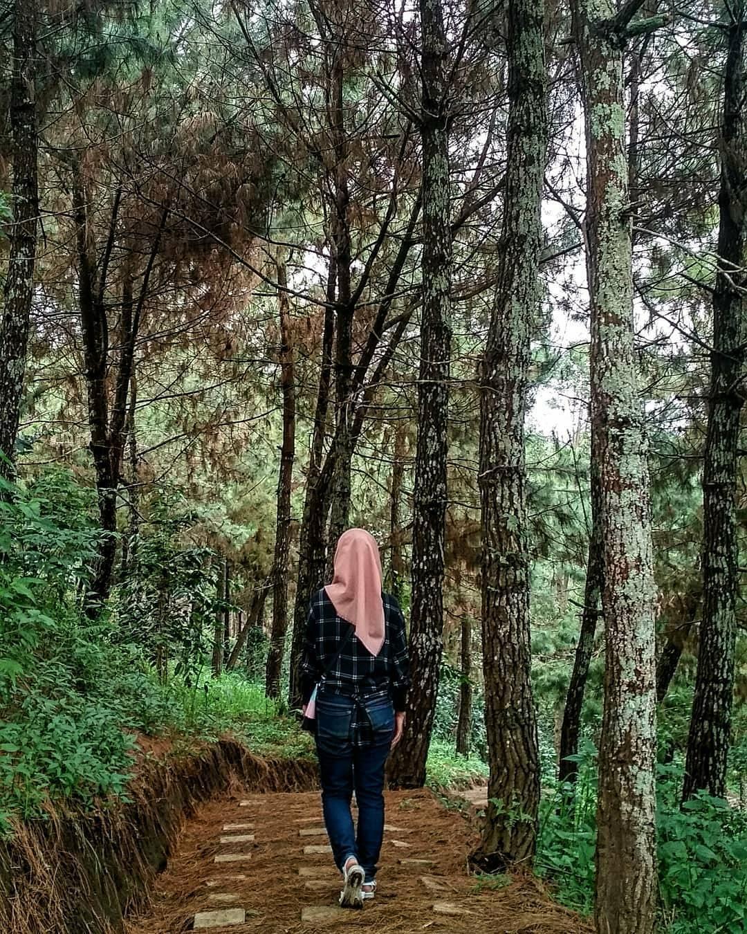 Hutan Pinus, Malang, Kabupaten Malang, Dolan Dolen, Dolaners Hutan Pinus by hany nabilla - Dolan Dolen