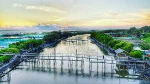 Mangrove Pantai Pasir Kadilangu, Mangrove Pantai Pasir Kadilangu Yogyakarta, Yogyakarta, Dolan Dolen, Dolaners