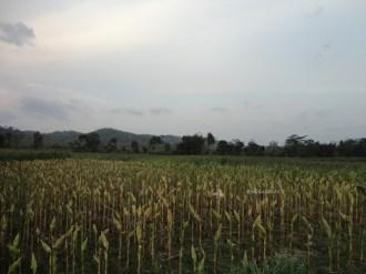 sunset riding - blusukan pegunungan menoreh kulonprogo (8)