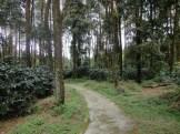 jalan jalan ke candi gedong songo semarang (148)